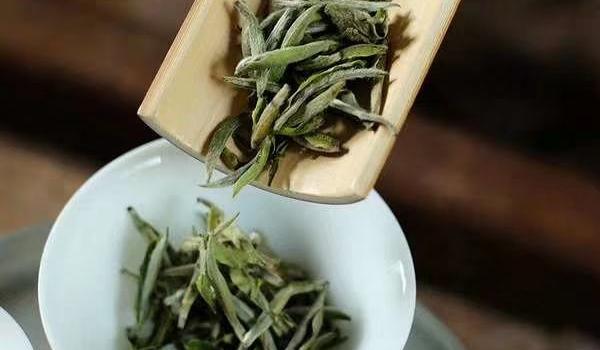 免费茶艺师培训