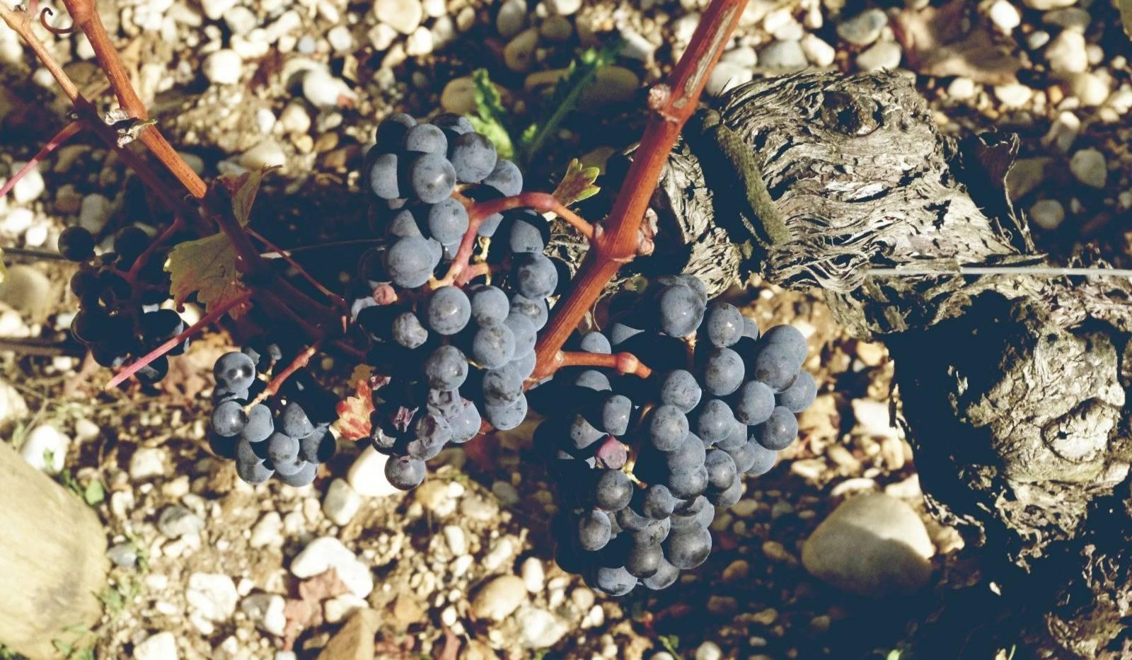 七号酒会遥远的葡萄酒天堂--智利葡萄酒品鉴会