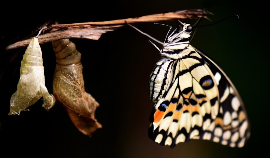 新爱婴科普月昆虫记